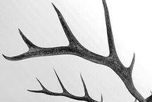 Deer-Deer Wendigo