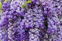 Flowers / by Natalia Kaylova