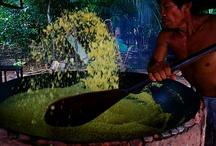 A Linda Amazônia / by fatinha