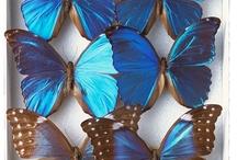 Mariposas, libélulas y otras maravillas
