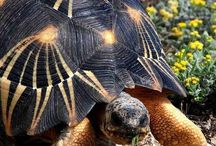 Animals - Turtles/Tortoises / Turtles, tortoises,etc. / by Rae Ann Kressin