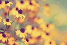 yellow <3