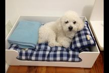 Ravi Gianeccinne  / I Love my puppy!