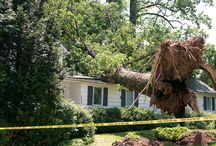Tree Accidents / 0