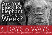 Elephant Appreciation Week / We are celebrating Elephants with a 6 Days - 6 Ways for Elephant Appreciation Week scheduled for September 19-24. We hope you will participate and help raise awareness! Follow us and find out what we are doing! #tidefortusks #ProtectOurMascot