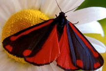 Dragonflies and Butterflies / by Kirsten Parris