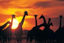 Botswana, a thrillseeker's oasis