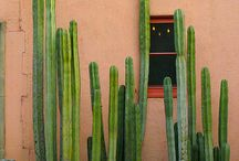 Ma che cactus dici? / All About Cactus and Cacti / by Margherita Antinori