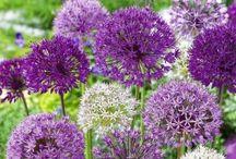 Blüten und Pflänzchen