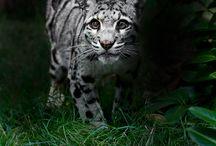 Animals / by Ryan Melcum