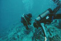 never dive alone / #wedivepantoloan #indonesia #sulawesi #sulawesitengah #sul-teng #palu #pantoloan #psobcpantoloan