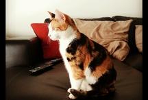 Gigi Cat