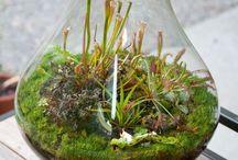 Декоративные растения / Decorative plants