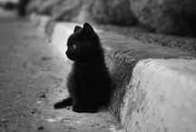Black Cats / This board is a joint posting project by Frauke, Raige, and I to see how many cool black cats we can find.