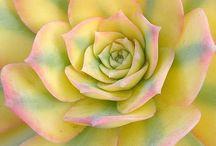cactus and succulent