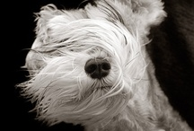 Dog Photo Art