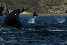 Awesome Animals of the Sea