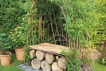 Garden willow