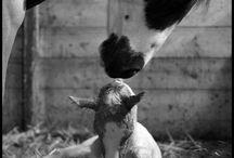 animali-natura