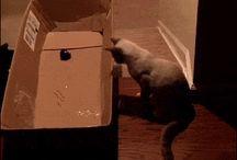 gatti buffi