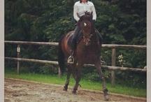 Haras de lukos / Photographies des chevaux du haras