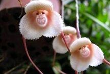 Flowers look a like