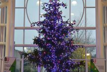 The Twitter Tree / This year's BU Christmas tree is no ordinary tree - it's interactive! You can tweet @bournemouthuni to change the colours of the lights using one of the following options - #BUsupport #BUcourses or #BUcommunity