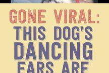 Hunde / Hunde  die besonders sind!