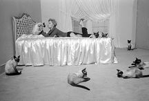 """Cats at The Great Cat / """"Our perfect companions never have fewer than four feet."""" Colette"""