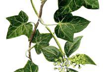 roślinne