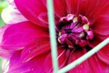 Think  Pink....love it :)