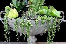 jardinería para departamentos y lugares pequeños
