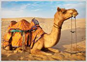 North India Holidays Packages / Vacation in North India - Book North India tour package and holiday package from Ghumakkarmasti.com and get the best deal on every package.