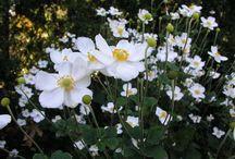 witte tuinplanten en grassoorten