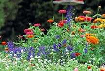 Gardens and Flowers / Outside gardens and ideas I like