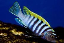 Tropical Fish / www.naturalworldpets.co.uk