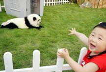 Kigu Loves Animals
