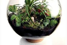 Terrariums & miniature gardens / Wee gardens in a glass receptacle