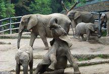 Elephants ❤️ / by Alicia Hudson