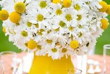 Daisies in yellow flower pot