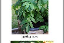 Art Gardening