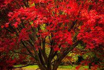 scenery/autumn colours
