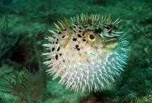 Marine Biology Encyclopedia
