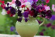 flowers / by Daniela David