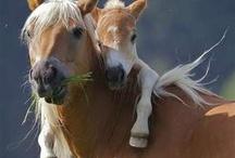 Hevosia / ?