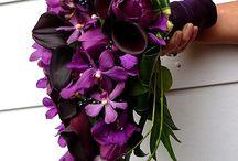 Fialová - Purple / Fialová - Purple