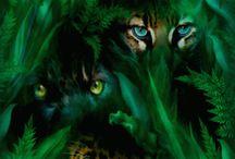 Tigres en movimientos