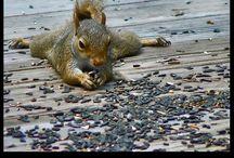 squirrels.....