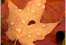 Autumn - Seasons