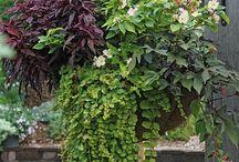 Compost to garden  / by Matt N Wendy Pritchett